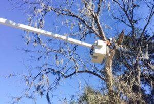 Tree Companies Near Me Alachua
