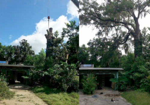 tree services daughtry tree services newberry fl