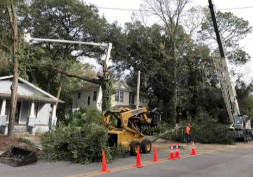 gallery daughtry tree services newberry fl